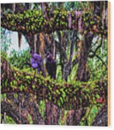 Two Buzzards In A Tree Wood Print