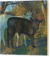 Two Calfs Wood Print