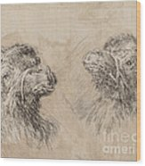 Two Camel Heads [recto] Wood Print