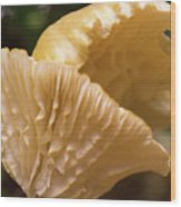 Two Cantharellus Wood Print