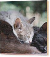 Two Cats  Sleeping  Wood Print