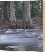 Two Ceders Next To A Mountain Stream Wood Print