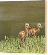 Two Chicks Wood Print