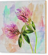 Two Clover Flowers With Pastel Shades. Wood Print