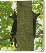 Two Cubs Wood Print
