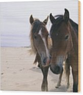 Two Curious Wild Horses On The Beach Wood Print by Nick Caloyianis
