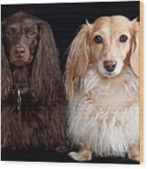 Two Dachshunds Wood Print by Doxieone Photography