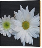 Two Daisies Wood Print