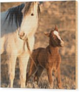 Two Days Old Wood Print