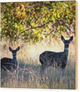 Two Deer In Autumn Meadow Wood Print