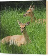 Two Deer In Tall Grass Wood Print