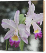 Two Delicate Orchids Wood Print