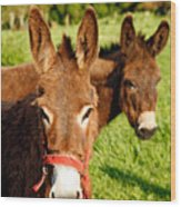 Two Donkeys Wood Print