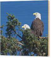 Two Eagles Wood Print