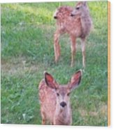 Two Fawn Wood Print