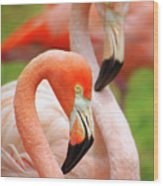 Two Flamingoes Wood Print by Carlos Caetano