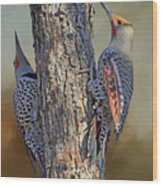 Two Flickers Wood Print