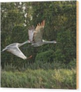 Two Florida Sandhill Cranes In Flight Wood Print