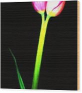 Two For One Tulip Wood Print