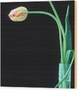 Two French Tulips Wood Print