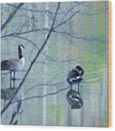 Two Geese On A Lake Wood Print