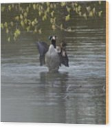 Two Geese On A Pond Wood Print