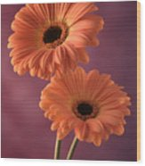 Two Gerberas 2 Wood Print