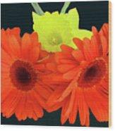 Two Gerbers And Daffodil Wood Print