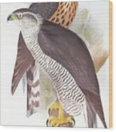 Two Goshawks Wood Print