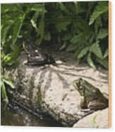 Two Green Frogs Wood Print
