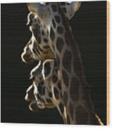 Two Headed Giraffe Wood Print
