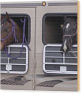 Two Horses Are Ready To Travel Wood Print