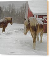 Two Horses In Winter Wood Print