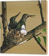 Two Hummingbird Babies In A Nest 5 Wood Print