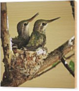 Two Hummingbird Babies In A Nest Wood Print