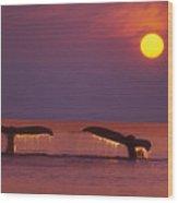 Two Humpback Whales Wood Print