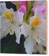 Two Iridescent White Rhoddys Wood Print