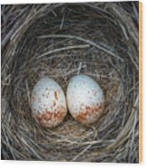Two Junco Eggs In The Nest Wood Print