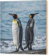 Two King Penguins Facing In Opposite Directions Wood Print