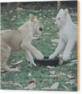 Two Lion Cubs Playing Wood Print