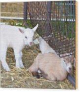 Two Little Goatlings Wood Print
