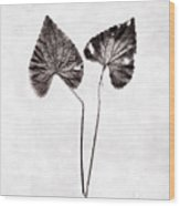 Two Little Violet Leaves Wood Print