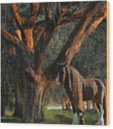 Two Majestic Souls Wood Print