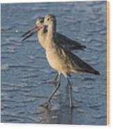 Two Marbled Godwits Wood Print