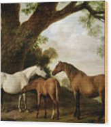 Two Mares And A Foal Wood Print