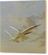 Two Mediterranean Gulls In Flight Wood Print by Christiana Stawski