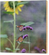 Two Monarch Butterflies And Sunflower 2011 Wood Print