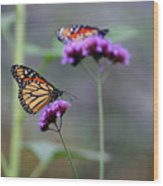 Two Monarchs On Verbena Wood Print