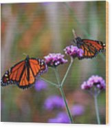Two Monarchs Sharing 2011 Wood Print