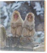 Two Monkeys Wood Print